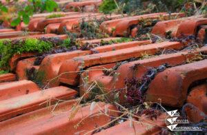 Entretenir la toiture et les façades - toiture mousse